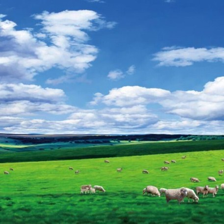 Vast grassland